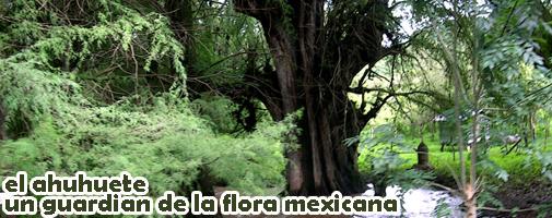 ZONAS CLIMATICAS EN MEXICO P127AHUHUETE